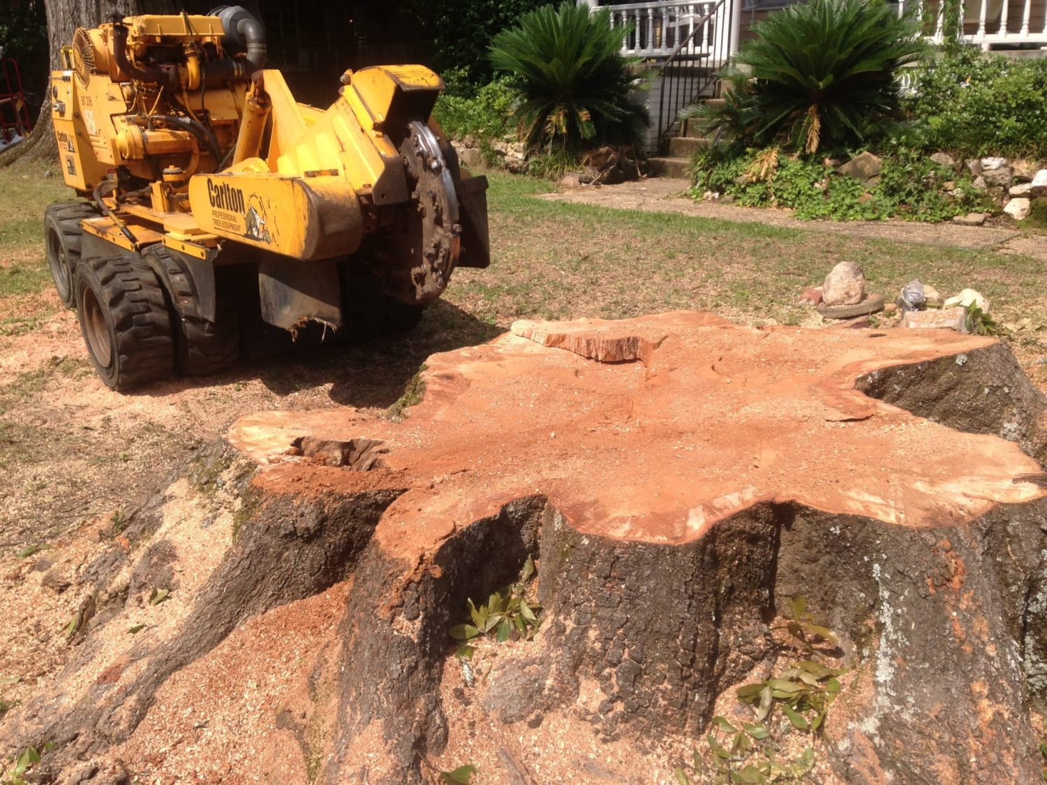 A large tree stump being removed in Montgomery, AL with a Stump Grinder