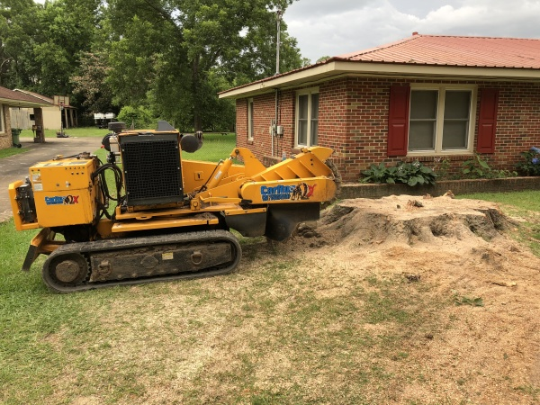 Using a stump grinder to remove a large oak tree stump near a home in Millbrook, AL.