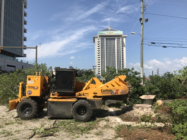 Stump Grinding In Downtown Montgomery, AL