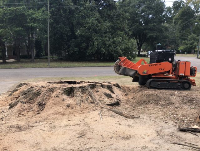 One of the biggest tree stumps in Montgomery, AL being removed with a stump grinder.