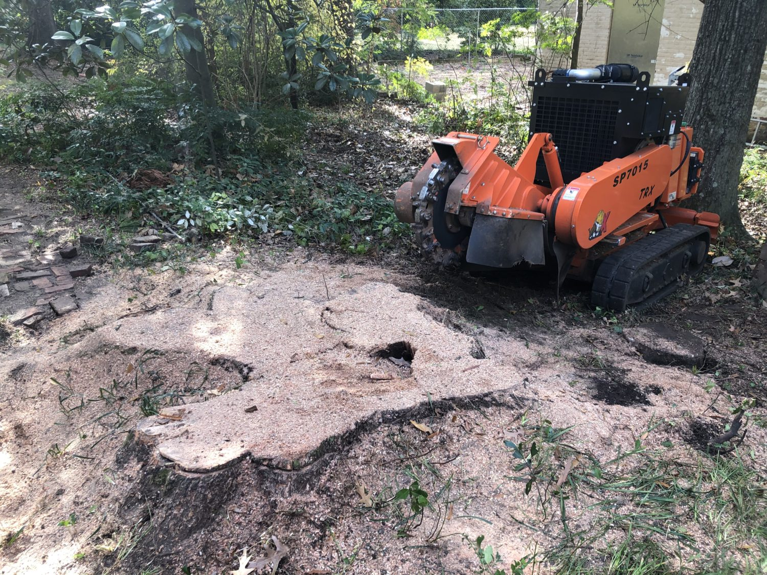 Large oak stump being ground up and removed in Montgomery, AL